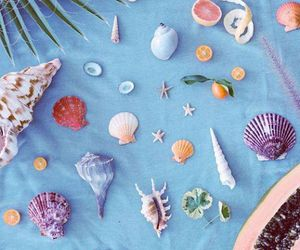 ocean and shell image
