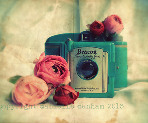 camera, vintage, and rose image