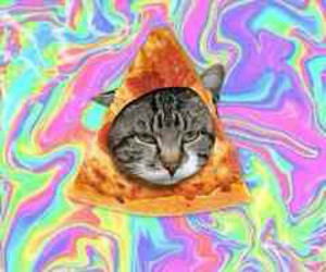 pizza cat awesome image