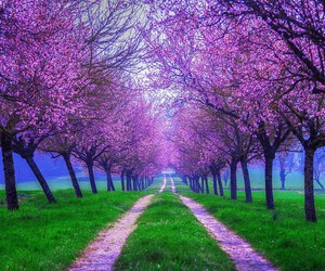 beautiful, nature, and purple image