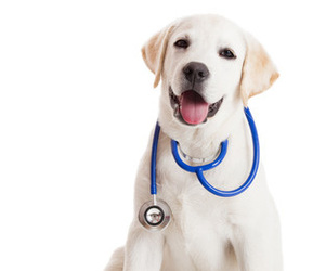 puppy, stethoscope, and cute image