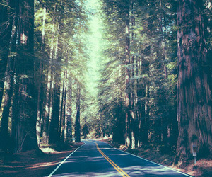 forest, tree, and road image