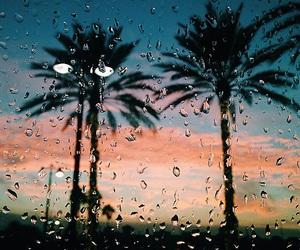 rain, palms, and palm trees image