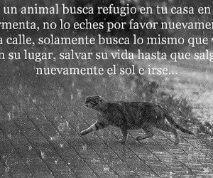 animal, calle, and frases image