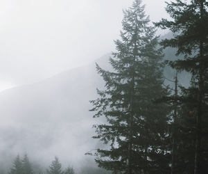 fog, indie, and nature image