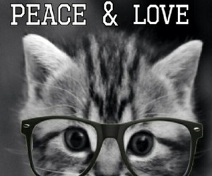 cat, peace, and love image