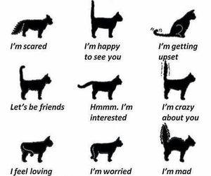 cat, tail, and speak image