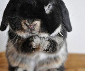 animals, bunny, and cuteness image