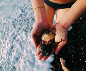 beach, sea, and shells image