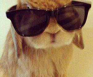 bunny, cute, and cool image