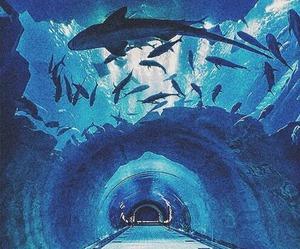 blue, shark, and fish image