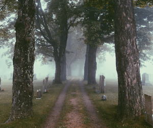 pale, tumblr, and forest image