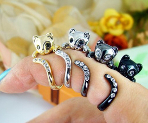 cat, rings, and kitten image