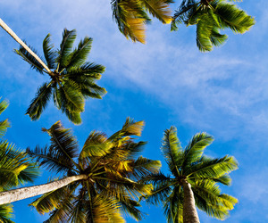 palm trees, background, and beach image