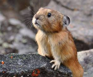 cute animals, rodents, and pica image