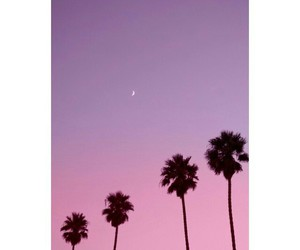 summer and pink image
