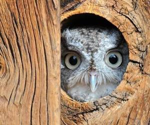 birds, cute animals, and owls image