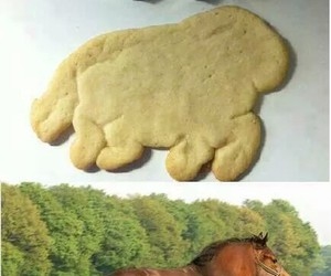 horse, funny, and fat image