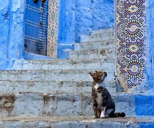 cat, photography, and Greece image