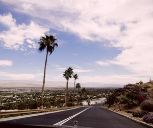 summer, palms, and road image