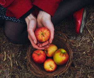 apple, forest, and fruit image