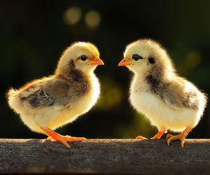 duck, cute, and adorable image