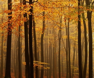 autumn, fog, and red image