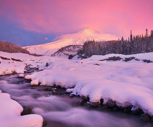 snow, pink, and beautiful image