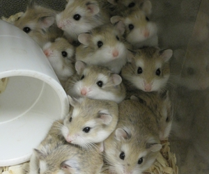 cute, hamsters, and so manyyy image