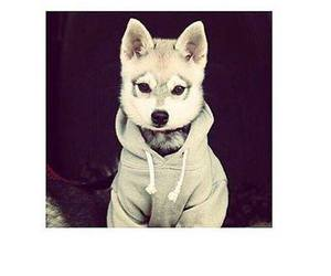 puppy, clothes, and lol image