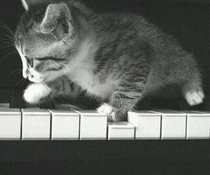 piano, cat, and cute image