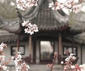 flower, sakura, and japan image
