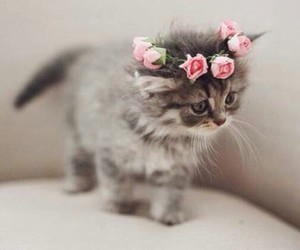 cat, cute, and flowers image