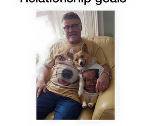 dog, funny, and Relationship image