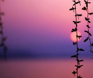 pink, sun, and purple image