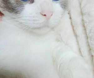 blue, eyes, and meow image