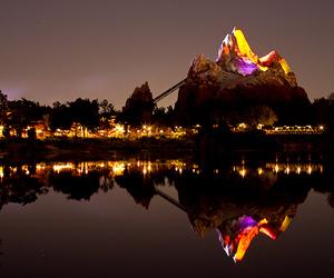 Animal kingdom, lights, and night image
