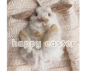 bunny, easter, and love image