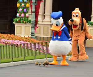 disneyland, duck, and disney image