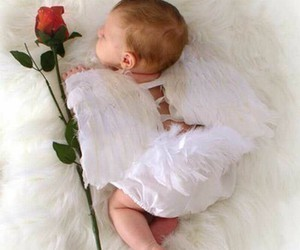 baby, angel, and rose image