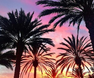 palm trees, sunset, and atardecer image