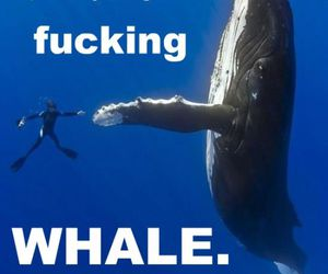 whale, five, and funny image