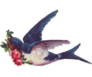 bird, flowers, and rose image