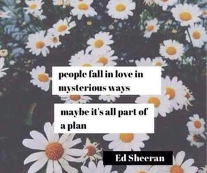 ed sheeran, quote, and flowers image