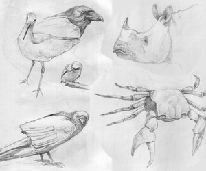 art, birds, and drawings image