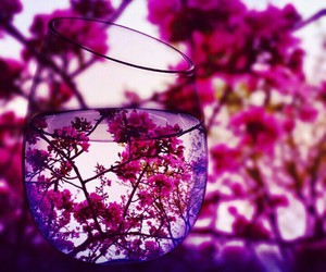 colorful, flower, and life image