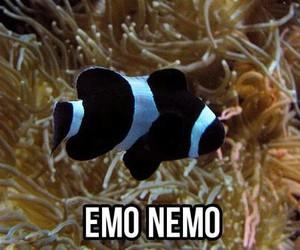 nemo, emo, and funny image