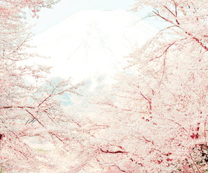 pink, sakura, and japan image