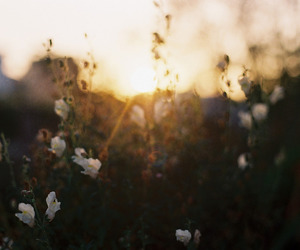 flower, photography, and vintage image