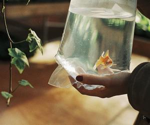 fish, goldfish, and water image